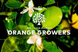 Meet Your Florida Orange Growers